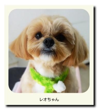 mix犬(雑種)のレオちゃん