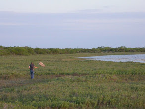 Photo: Sweeping the salt flats at Laguna Atascosa NWR