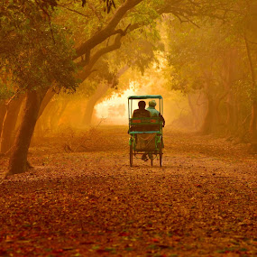 Heaven on earth - KNP Bharatpur India by Vijay Singh Chandel - City,  Street & Park  Street Scenes ( picoftheday, life, bench, park, autumn, street, pixoto, forest, india, leaf, misty, automn )