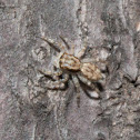 Gray Wall Jumper