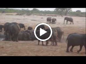 Video: The ultimate elephant hangout - the waterhole, where just seconds before I took this video and seconds after, they were trumpeting at each other.