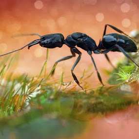 ant by Djayustinus Inc - Animals Insects & Spiders