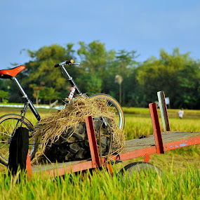 my bike by Arif Setiawan - Transportation Bicycles