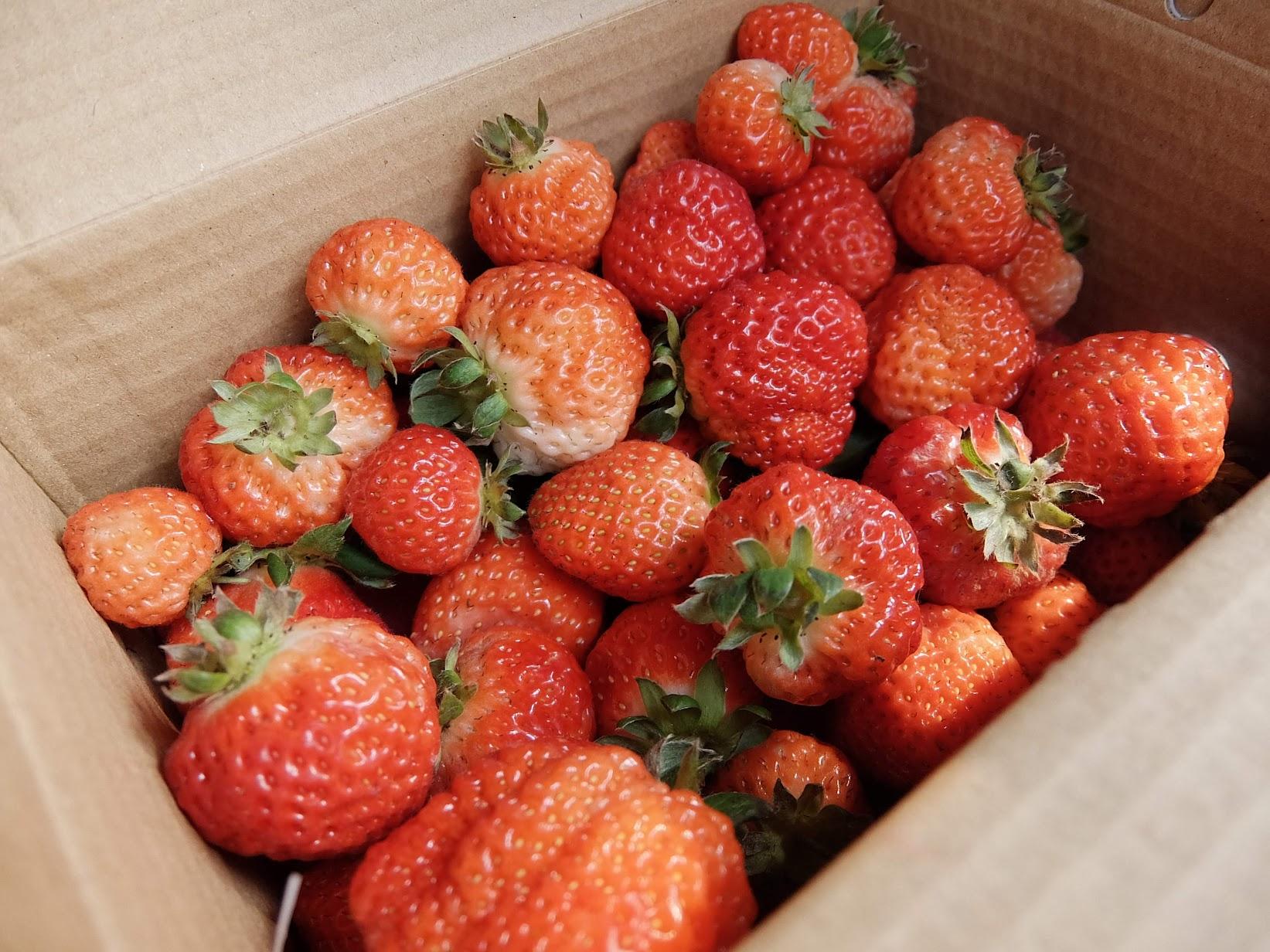 滿滿的草莓啊