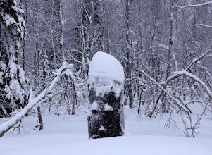 Photo: Дядька лесной