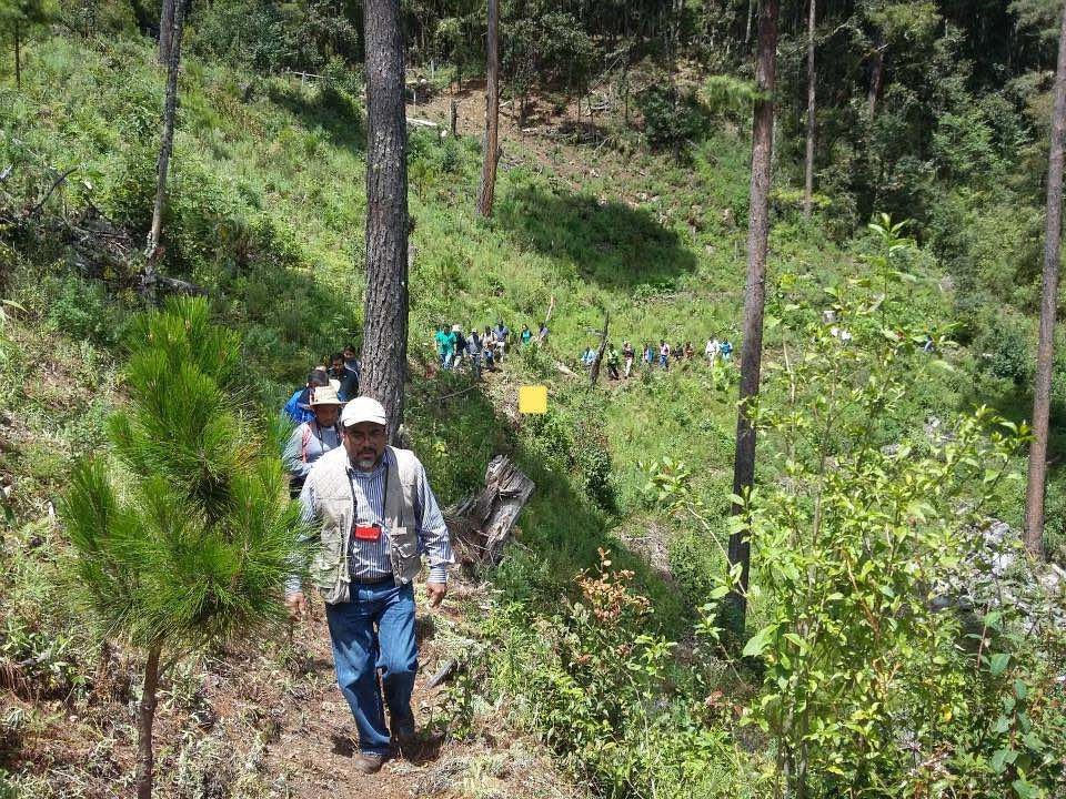 Bosques de Analco en Oaxaca