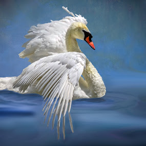 Swan on Blue by Joan Sharp - Digital Art Animals ( blue background, white, swan, wings spread, digital art,  )