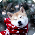 Akita Pack 2 Live Wallpaper icon