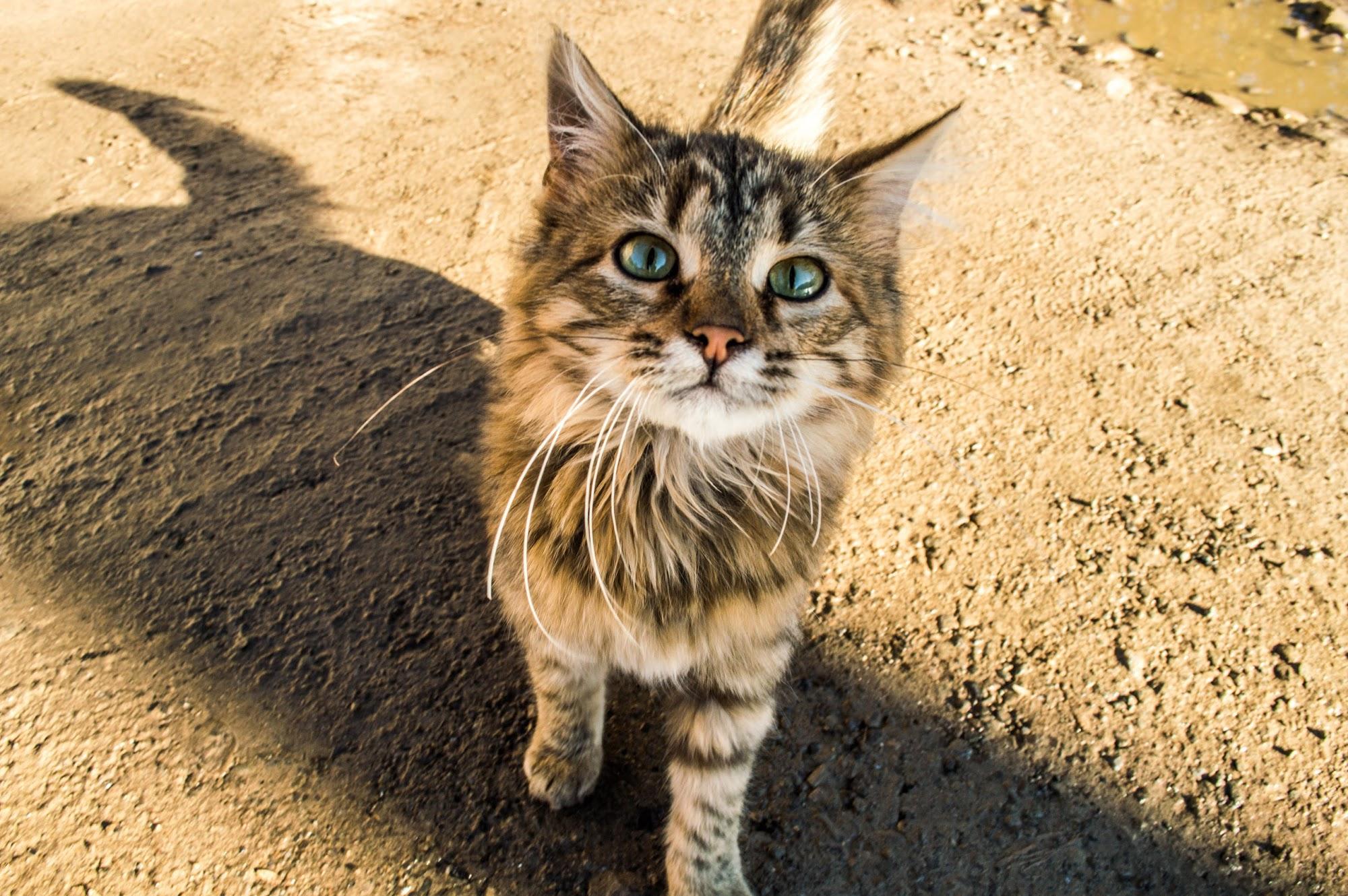 Кіт Осмолода