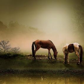 HORSES by Zainal Arifin  - Digital Art Things