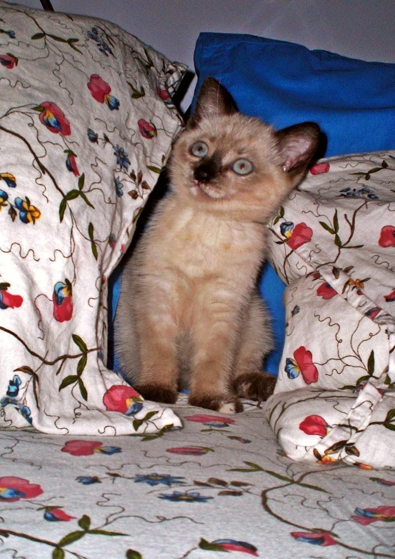 Lola nel lettone di Marygio16