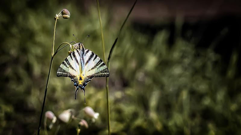 La Vita di una farfalla di utente cancellato
