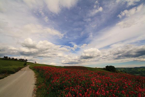 la campagna si colora di rosso di rino_savastano