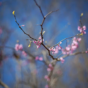 by Tiffany Bailey - Nature Up Close Trees & Bushes