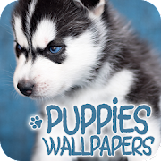 Wallpapers with puppies
