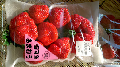 """Photo: Believe it or not; I found this much giant strawberries (Ichigo) at a supermarket near my mother's house. My hometown Fukuoka (""""Ama-ou"""" variety) and Tochigi (""""Tochi-otome"""" variety) in north Kanto are two popular Ichigo regions. Sweet and juicy, Japaness Ichigo tastes like peach. Last year, I remember we picked up one news from India on ASKSiddhi (http://jp.asksiddhi.in/news/27032013_1/260.html) that there is an experimental effort in Talegaon strawberry farm remotely controlled from Japan (Reference: http://archive.indianexpress.com/news/strawberry-farm-in-talegaon-remotecontrolled-from-japan/1093903/). Soon Indian consumers may enjoy the quality of Japanese Ichigo. 16th January updated -http://jp.asksiddhi.in/daily_detail.php?id=425"""