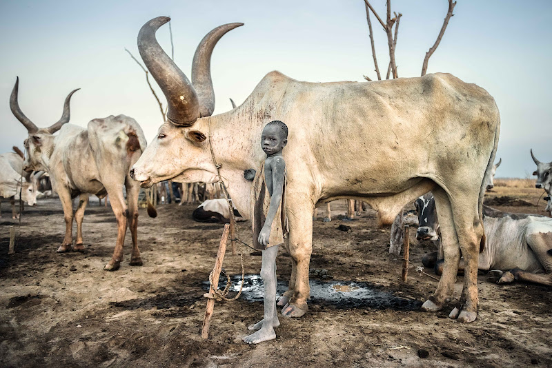 The Child and the Bull di Roberto Pazzi Photography
