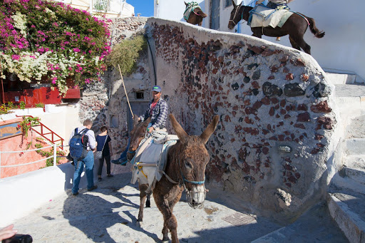 Santorini-donkey.jpg - Donkey power used to be the primary way visitors would ascend the steps of Oia, Santorini.