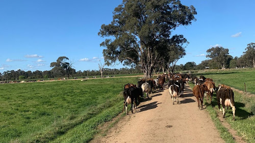 Sharefarm 450 acre Biodynamic DairyFarm Northern Victoria