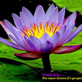 Waterlily... by Asif Bora - Typography Quotes & Sentences