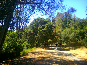Photo: Removing the eucalyptus and broom on the left would allow the native forest to fill in.