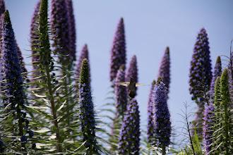 Photo: Hummingbird @ Huntington Beach Central Park, CA - http://photo.leptians.net