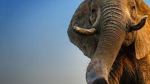 Jumbo: The Life of an Elephant Superstar thumbnail