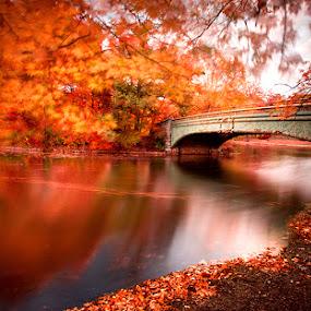 by Alexandru Popovski - Landscapes Weather ( fall, color, colorful, nature )