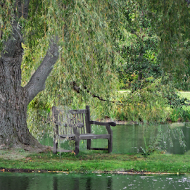 Serenity by Melissa Davis - City,  Street & Park  City Parks ( bench, kirtland ohio, holden arboretum, serenity, peace )