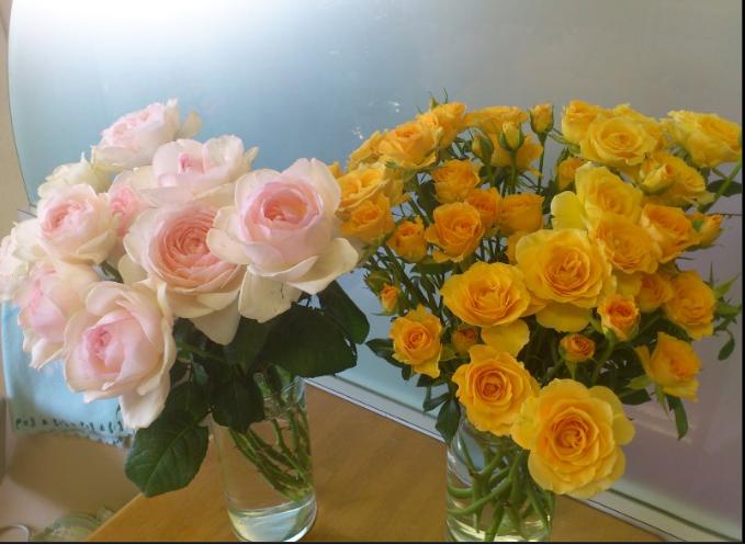 Tôi nhìn tấm ảnh này là muốn có ngay 1 cây hồng Yves Wishing để trồng, tiếc là chưa tìm thấy nơi bán ở thời điểm đăng bài viết này