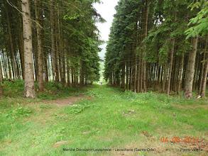 Photo: terug door het bos