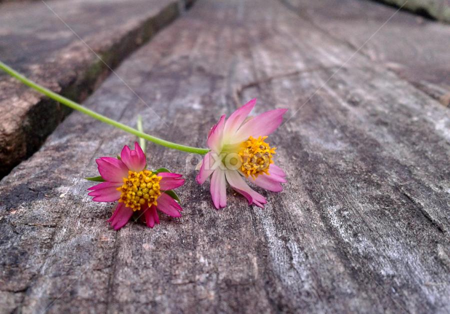 Bunga Untukmu Android Instagram Mobile Pixoto