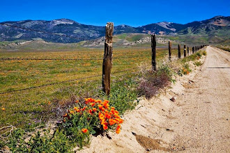 Photo: Antelope Valley Flowers - J. Houseman