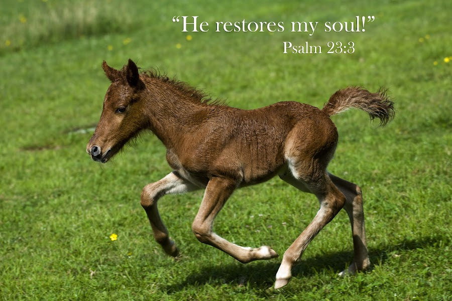 He restores my soul! by Steven Faucette - Typography Quotes & Sentences ( psalm 23, grayson highlands, scripture, virginia, pony )