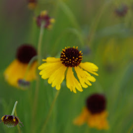 by Kathy Suttles - Flowers Flowers in the Wild