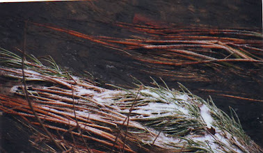 Photo: REEDS IN WATER