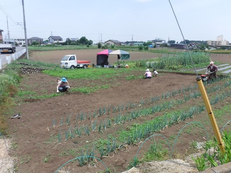 除草する人と耕耘する人