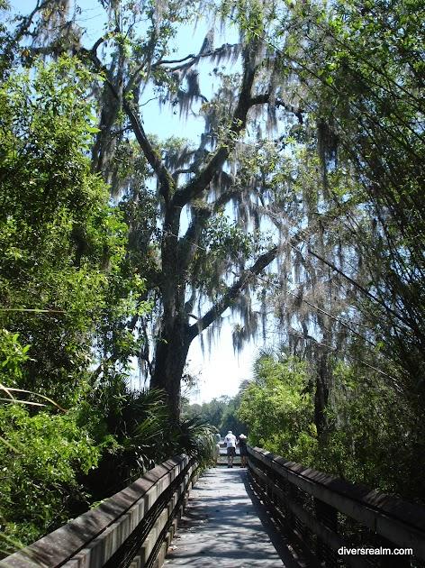2011 - Florida