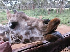 Photo: Giraffe Centre koło Nairobi