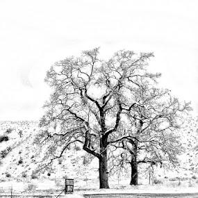 by Yoy Escosura - Landscapes Weather