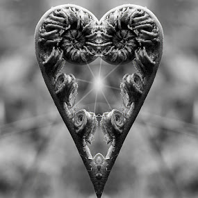 Natures Heart by Tony Simcock Eadie - Abstract Patterns ( mirror, plant, abstract, sunburst, heart, black and white,  )