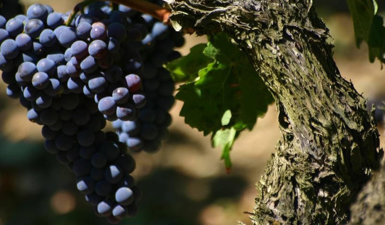 Vineyard with outbuildings Saint-Emilion