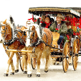 Dashing Through the Snow by Jenny Gandert - Public Holidays Christmas ( happy snowy experience )