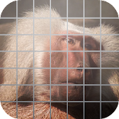 Baboon Tap Zoo Animal Puzzle
