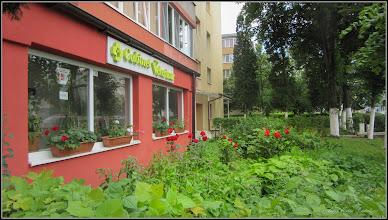 Photo: de pe Calea Victoriei, Mr.III, spatiu verde zona Cabinet veterinar - 2017.06.17