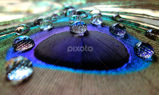 Abstract Background Of Beautiful Bird Peacock Feather With Water ...