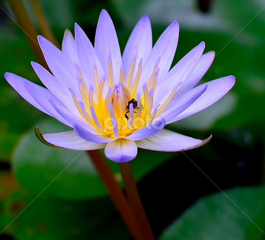 by Ary Hardiawan - Nature Up Close Flowers - 2011-2013