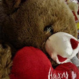 by Denise O'Hern - Public Holidays Valentines Day