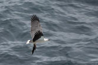 Photo: Sea eagle with its prey