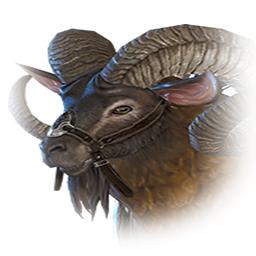 調教された山羊
